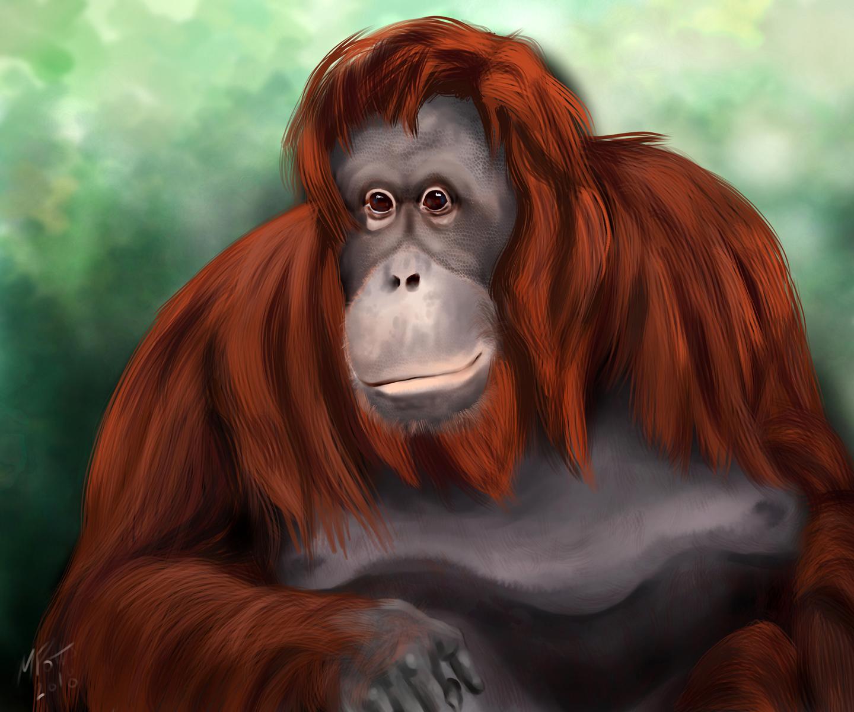 orangutan4sml